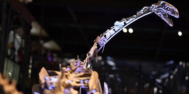 Ben le platéosaure est de retour à Bruxelles (PHOTOS & VIDEO) - La Libre
