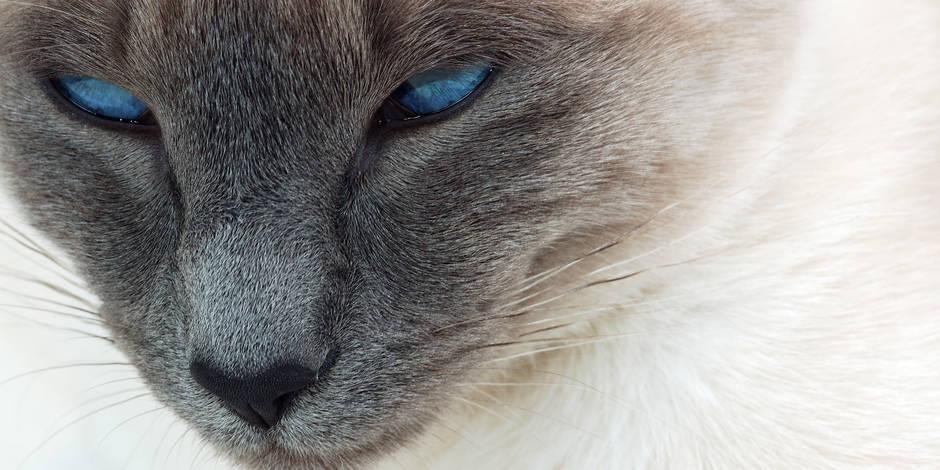 Biodiversité : ces dégâts causés par le chat
