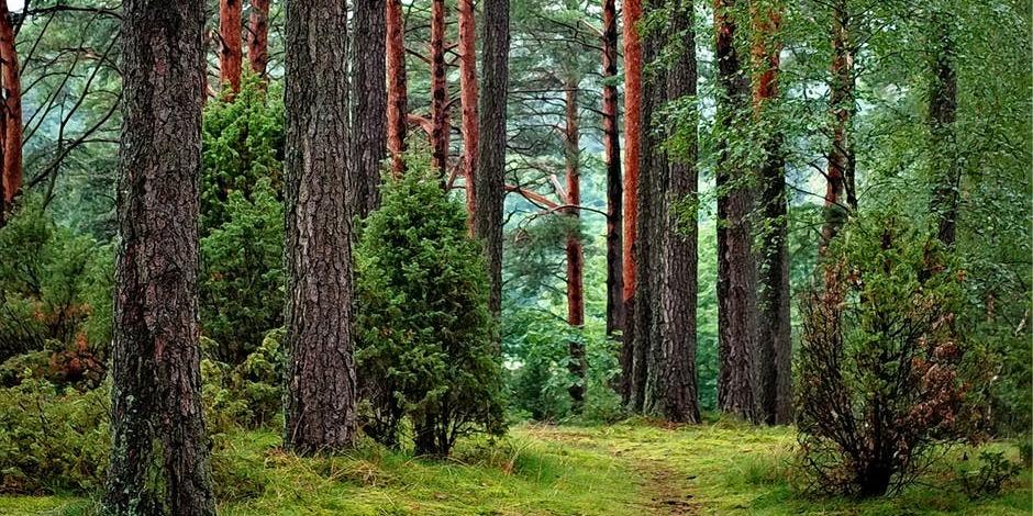 Sylvothérapie : Les arbres, nos alliés antistress