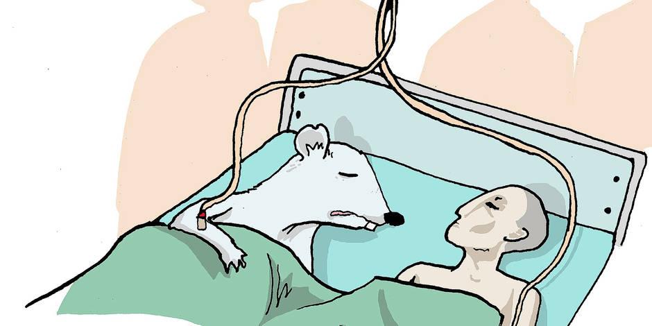 Le Code wallon du bien-être animal, facteur de délocalisation (OPINION)
